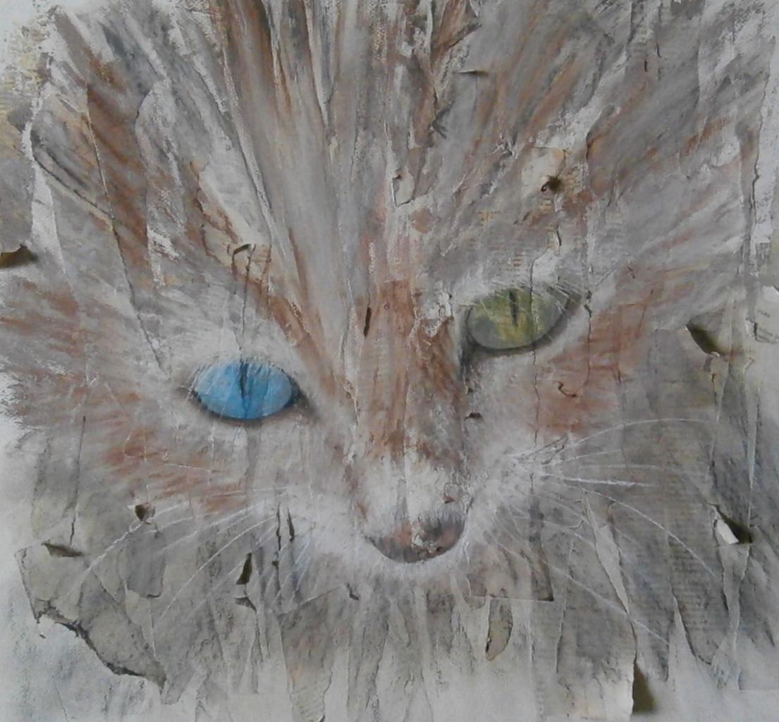 L'oeillade du chat
